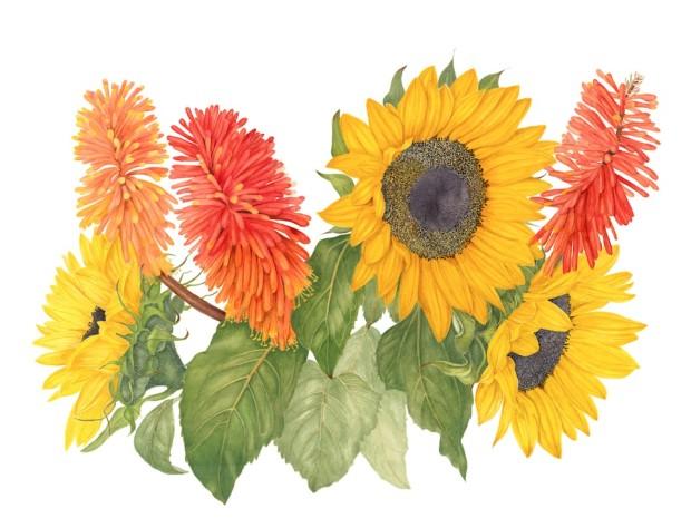 sunflower&torchlilies_2014_03_06__14h08